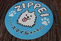 20110923_zippei1